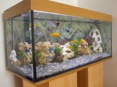Aquarium_01.jpg